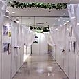 2 百合展の回廊